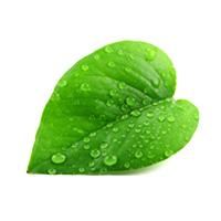 Foto: Grünes herzförmiges Blatt mit Wassertropfen