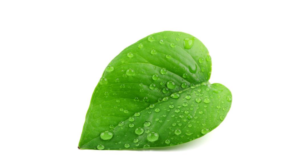 Foto: Blatt mit Wassertropfen vermittelt Frische und Umweltbewusstsein.